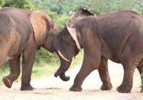 elephants_425
